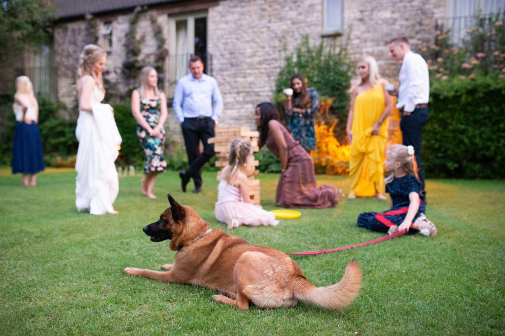 dog at wedding with guests playing garden games