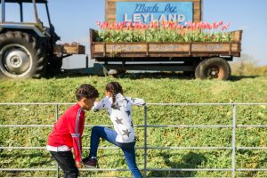 kids climbing fence by leyland tractor