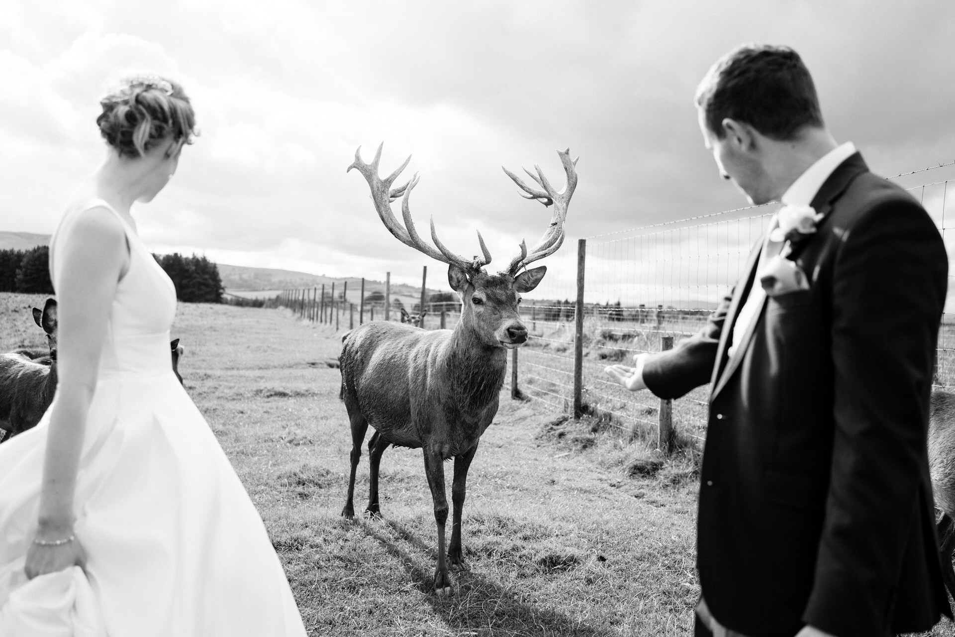 stag with bride and groom